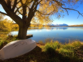 tree_and_boat_with_lake_view-t2